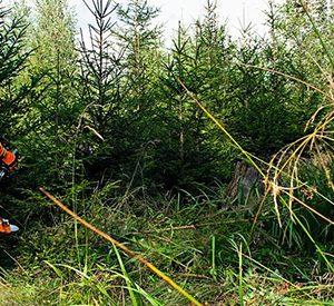 Desbrozadoras potentes para grandes extensiones, arbustos y tallos leñosos