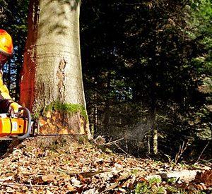 Motosierras para silvicultura, servicio de arboleda gruesa y madera dura